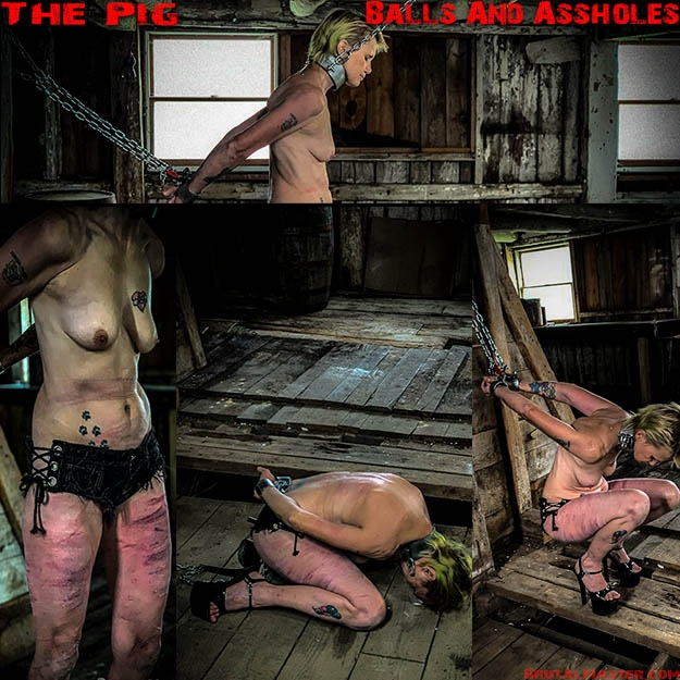 The Pig – Balls And Assholes (2020 | FullHD) (1.30 GB)
