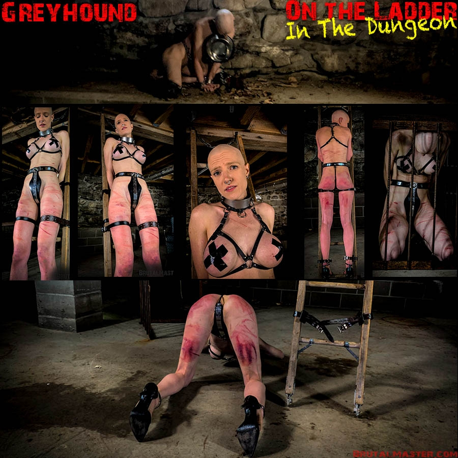 Slave Greyhound (2020 | FullHD) (2.50 GB)